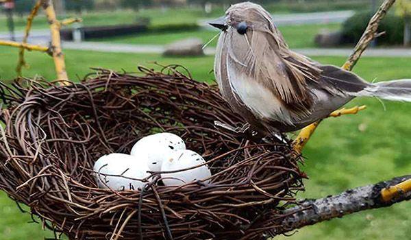 que significa que una paloma haga nido en tu casa