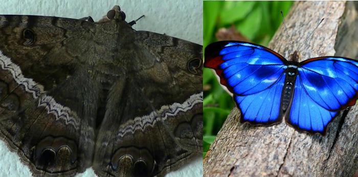 mariposas significado cuando llegan a casa