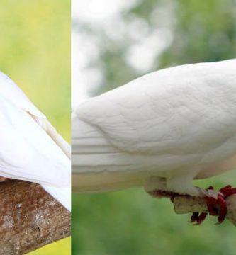 significado de ver palomas blancas