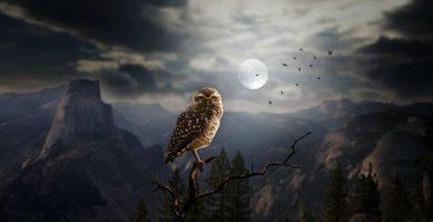 significado de lechuzas de noche