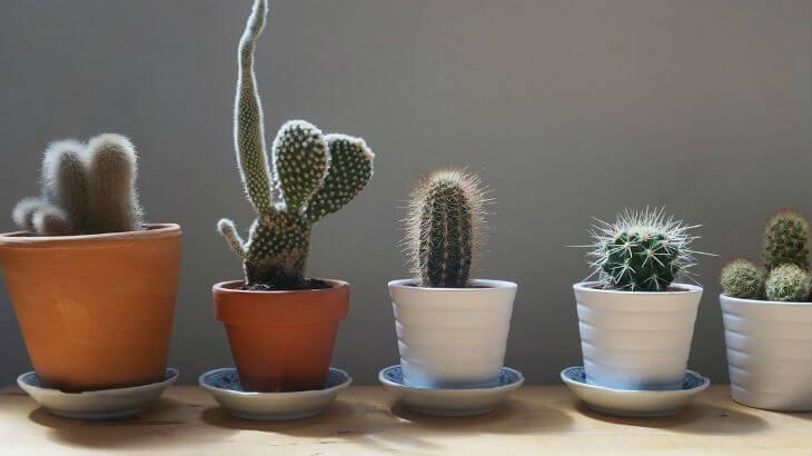 significado de cactus en el hogar