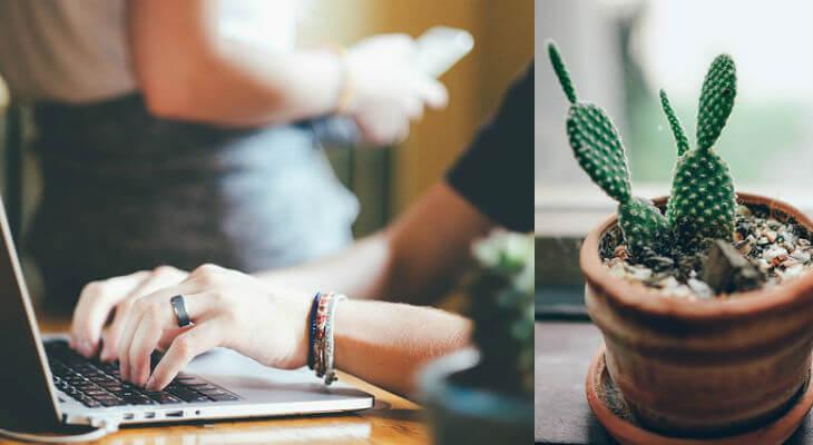 es bueno poner un cactus en oficina