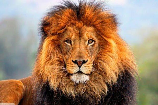 leon significado espiritual