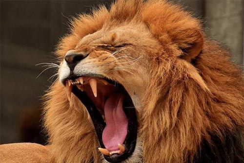 leon significado simbolico