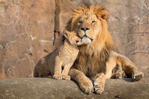 que significa el leon en psicologia