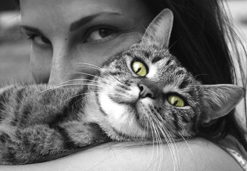 significado espiritual del gato