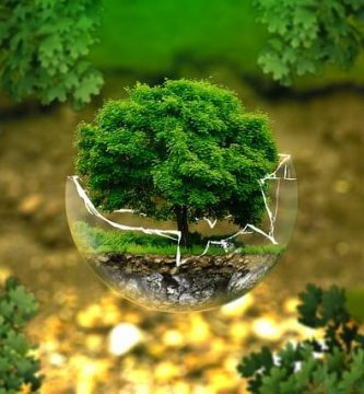 por qué regalar un bonsai