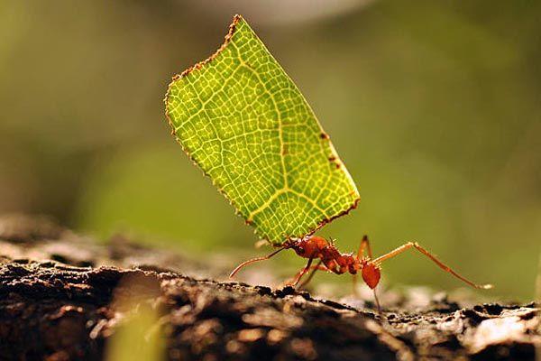 Significado esoterico de hormigas en casa