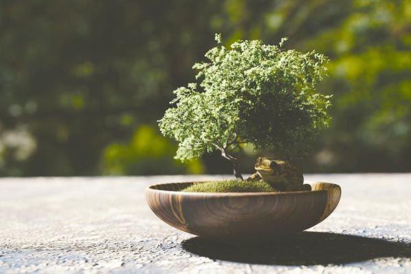 Significado espiritual del bonsai