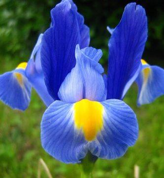 significado religioso de la flor de lis