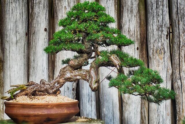 simbologia del bonsai