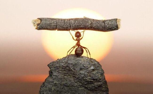 significado de la hormiga