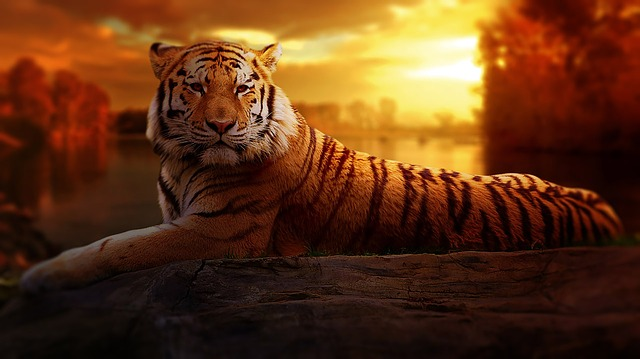 tigre significado espiritual