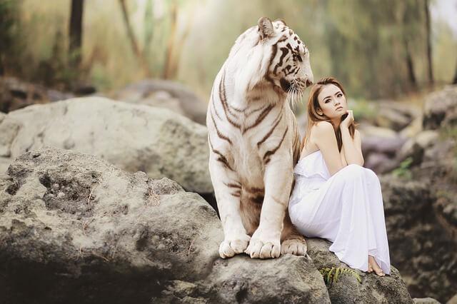 tigre totem