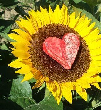 que significan los girasoles en el amor
