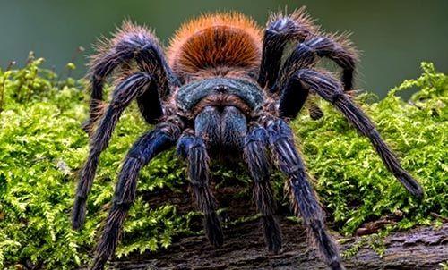 que significa soñar que te pica una tarantula