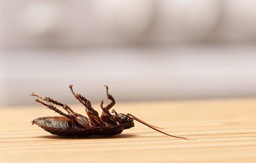 significado de pesadilla con matar una cucaracha
