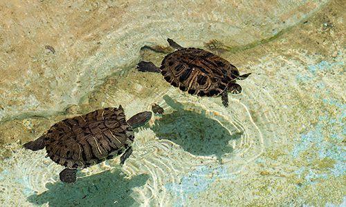 soñar con tortuga de agua