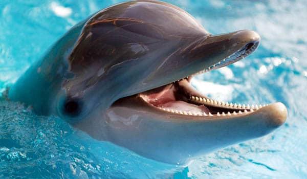 significado de soñar con delfin