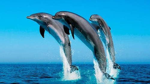 significado de soñar con delfines saltando
