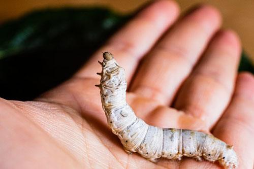 significado de soñar con gusanos