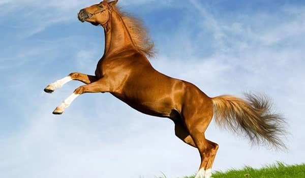 que significa soñar con caballo