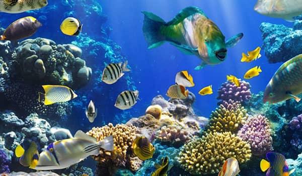 que significa soñar con peces