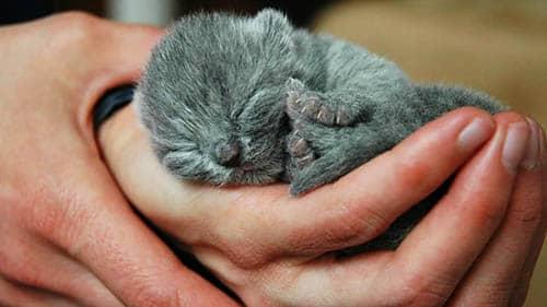 soñar con gatos pequeños